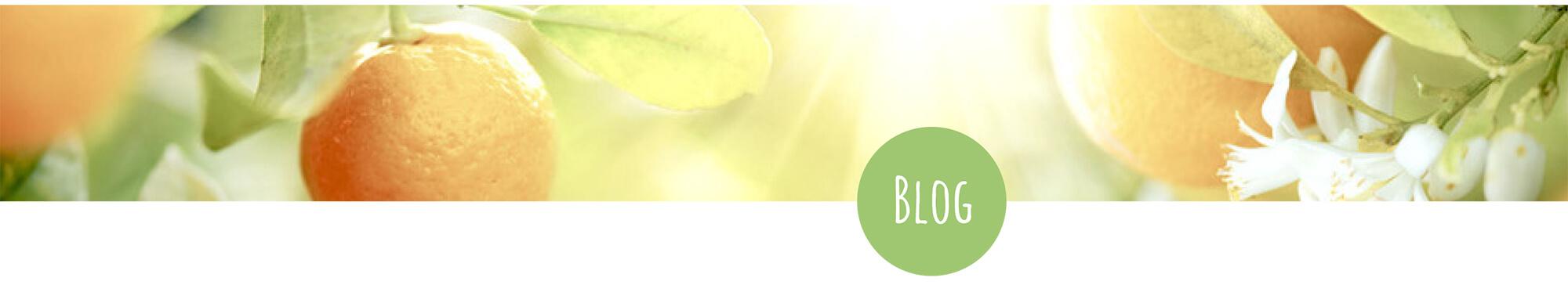 Blog Teaserbild